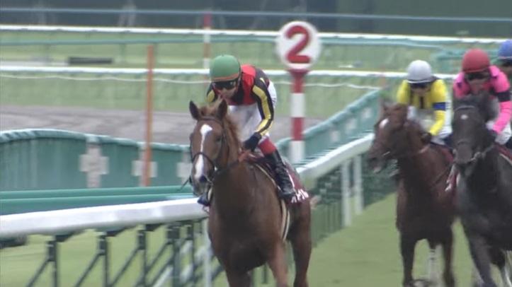神戸新聞杯2011 オルフェーヴル