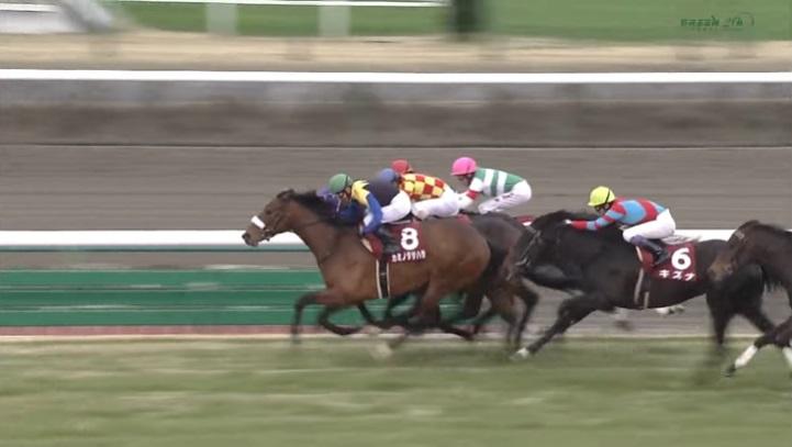 弥生賞2013 カミノタサハラ