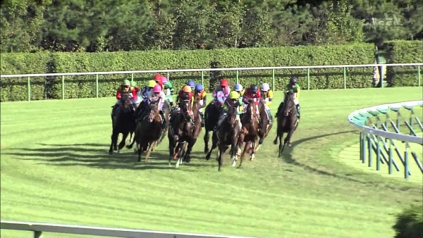 京成杯オータムハンデキャップ2015 出走予定馬・登録馬 参考レース