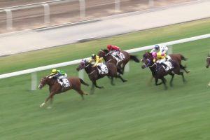 ブリザード 香港馬