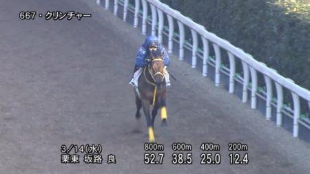 阪神大賞典 2018 追い切り