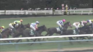 京都金杯2011