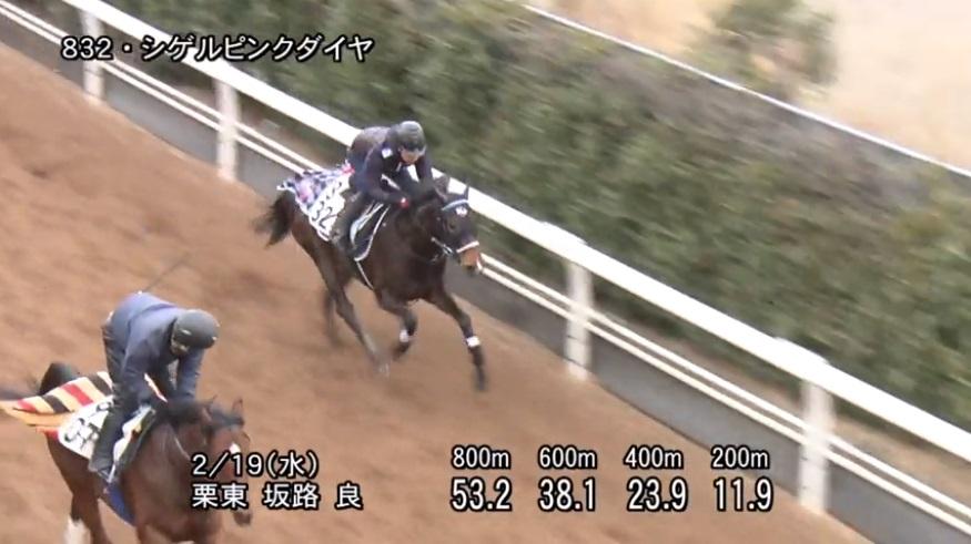 京都牝馬ステークス2020 追い切り