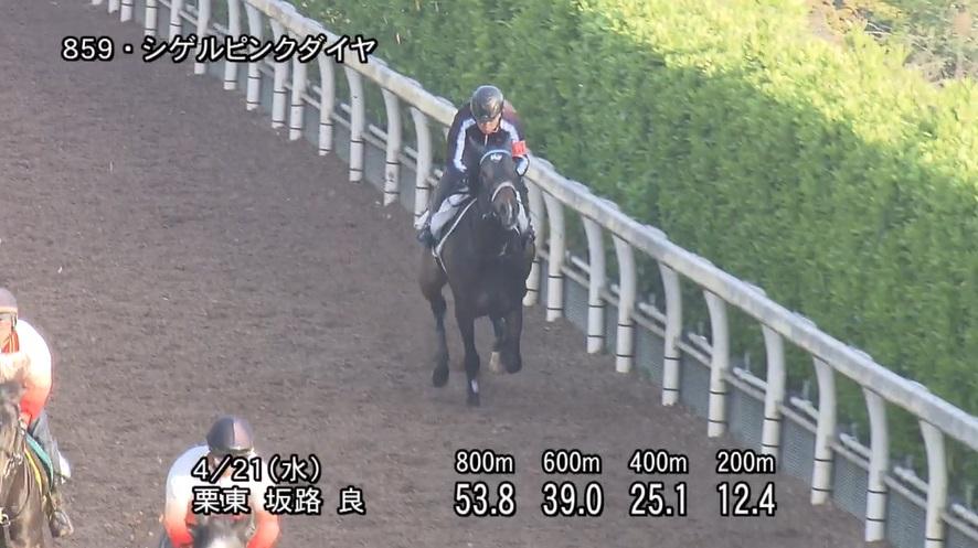 福島牝馬ステークス2021 追い切り